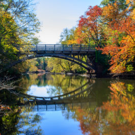 Landscape featuring the Mill River flowing under the East Rock Road Bridge surrounded by fall foliage