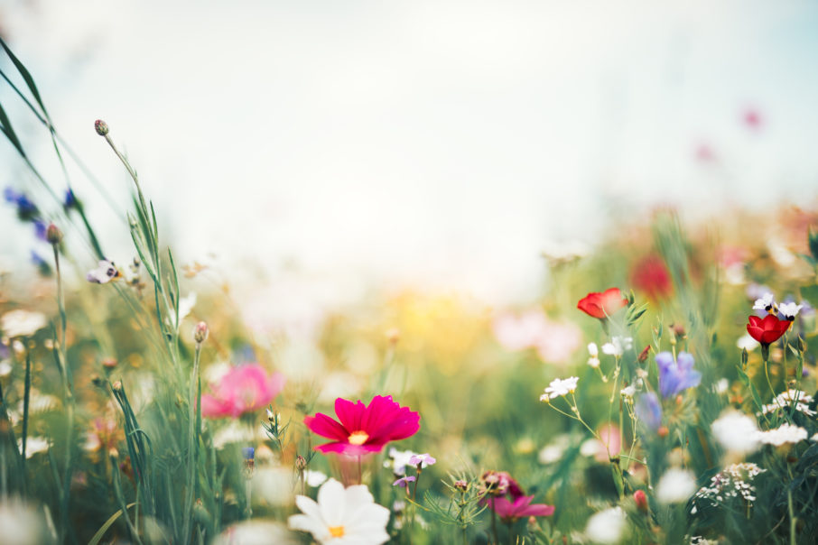 Summer meadow full of colorful flowers.